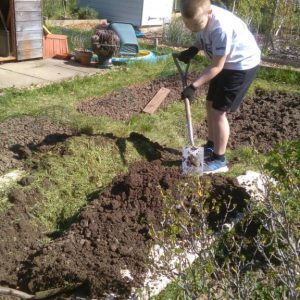 Digging on the school allotment
